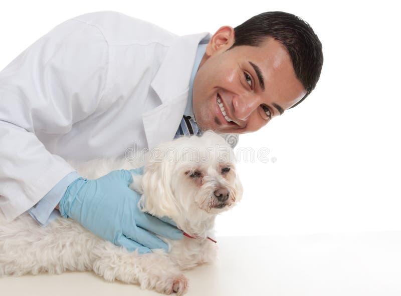 Freundlicher interessierender Tierarzt mit einem kranken Tier lizenzfreies stockbild