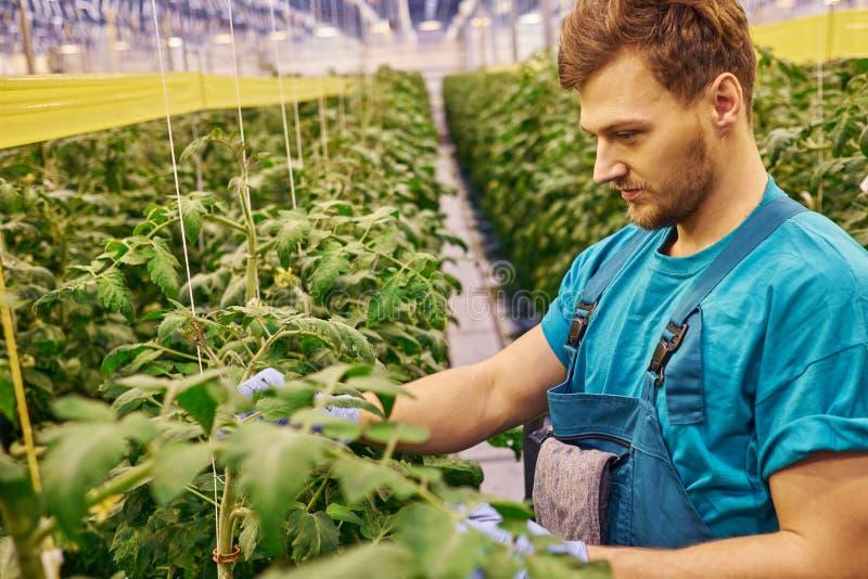 Freundlicher Landwirt, der an hydraulischer Scherenbühneplattform in g arbeitet lizenzfreie stockfotografie