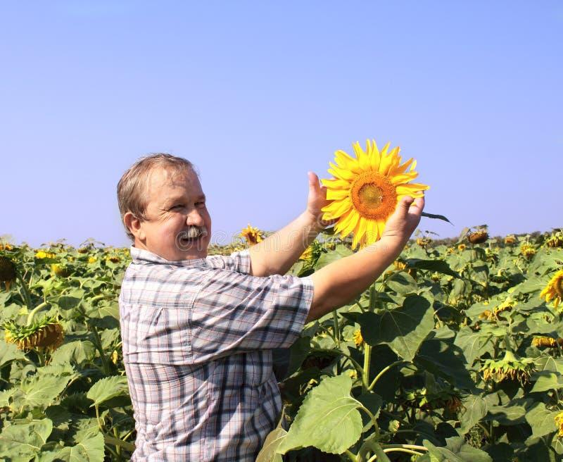Freundlicher Landwirt mit Sonnenblume stockbild