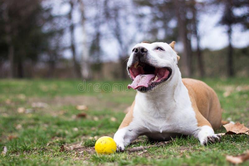 Freundliches Hundelächeln, nett und freundlich stockfoto
