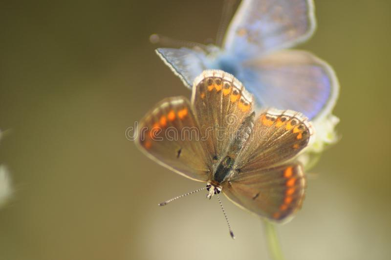 Freundschaft der Schmetterlinge/ stockfotografie