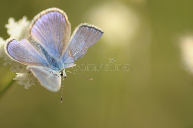 Freundschaft der Schmetterlinge/ lizenzfreies stockbild