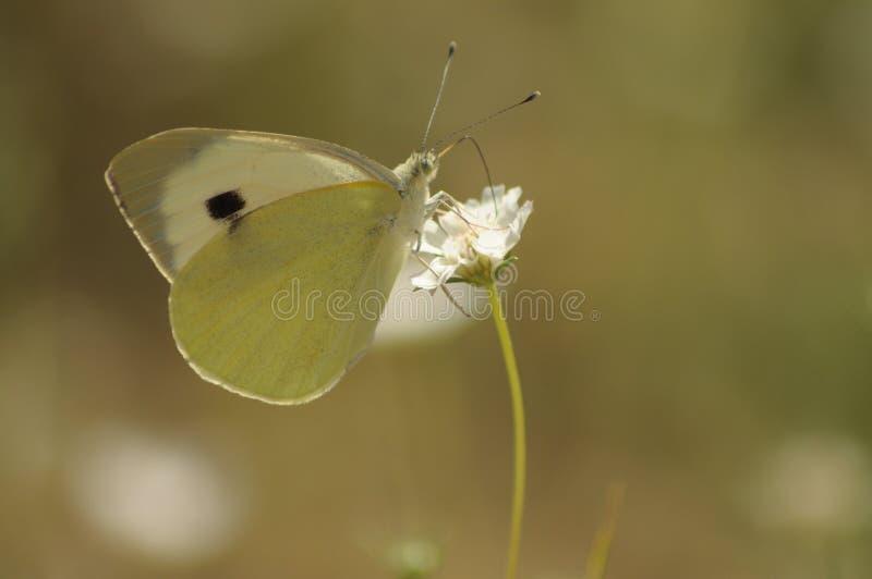 Freundschaft der Schmetterlinge/ stockfoto