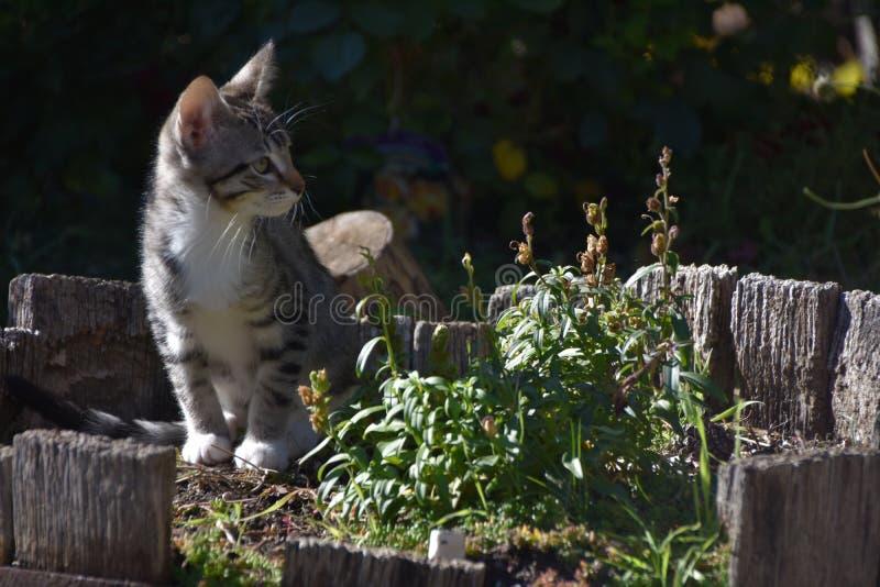 Freya在指示夏天的燃尽的短冷期龙旁边的小猫姿势结束 库存照片