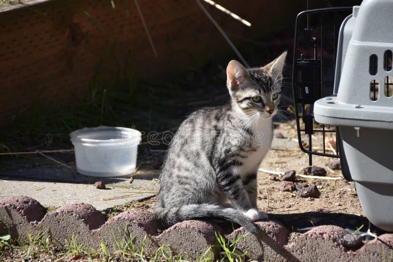 Freya-Kätzchen wirft nahe bei ihrer Haustier-Träger auf, die begeistert ihr folgendes Abenteuer erwartet stockbilder