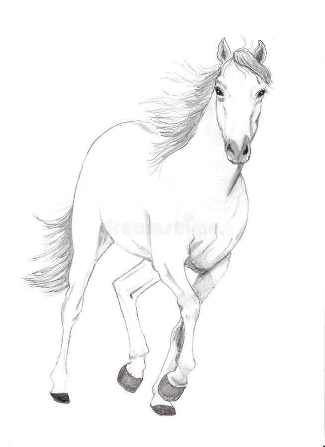 fri häst stock illustrationer