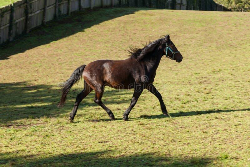 Fria hästar i ängen arkivbilder