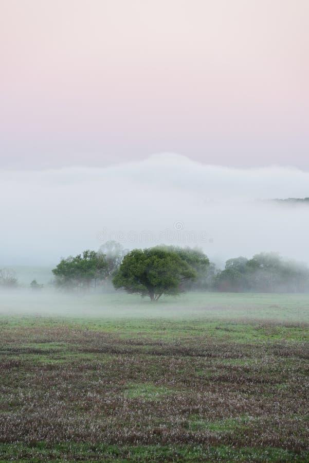 Fridfull plats av stora gröna träd i avlägsen dimma på utrymme för sommargryningkopia arkivbilder
