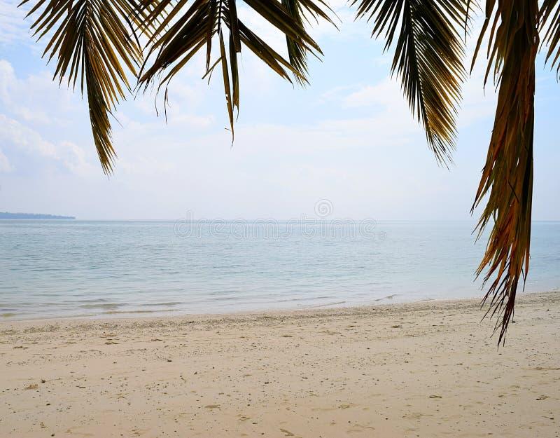 Fridfulla och ursprungliga Sandy Beach med stillsamt havsvatten med palmblad i förgrund - naturlig bakgrund arkivfoto