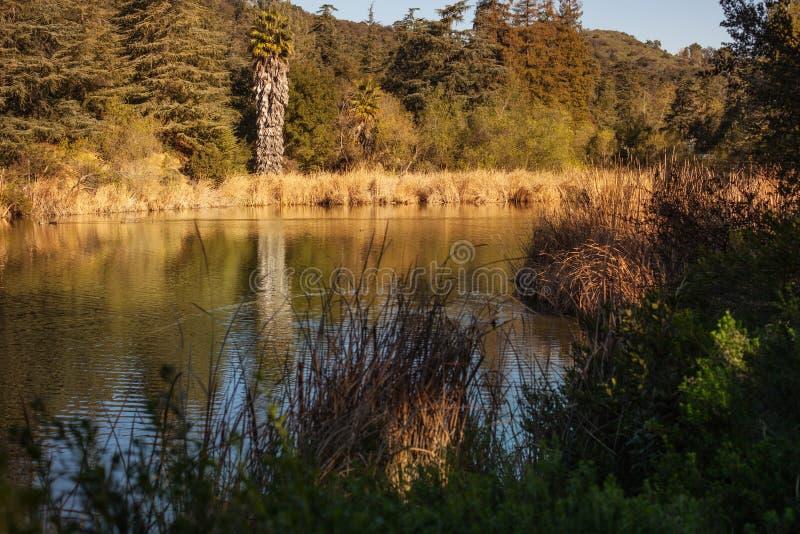 Fridsam Franklin Canyon vandring i Beverly Hills, Kalifornien Parkera består av 605 tunnländer och lokaliseras på arkivfoto