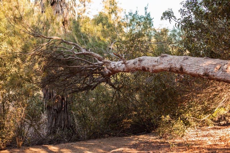 Fridsam Franklin Canyon vandring i Beverly Hills, Kalifornien Parkera består av 605 tunnländer och lokaliseras på royaltyfri bild