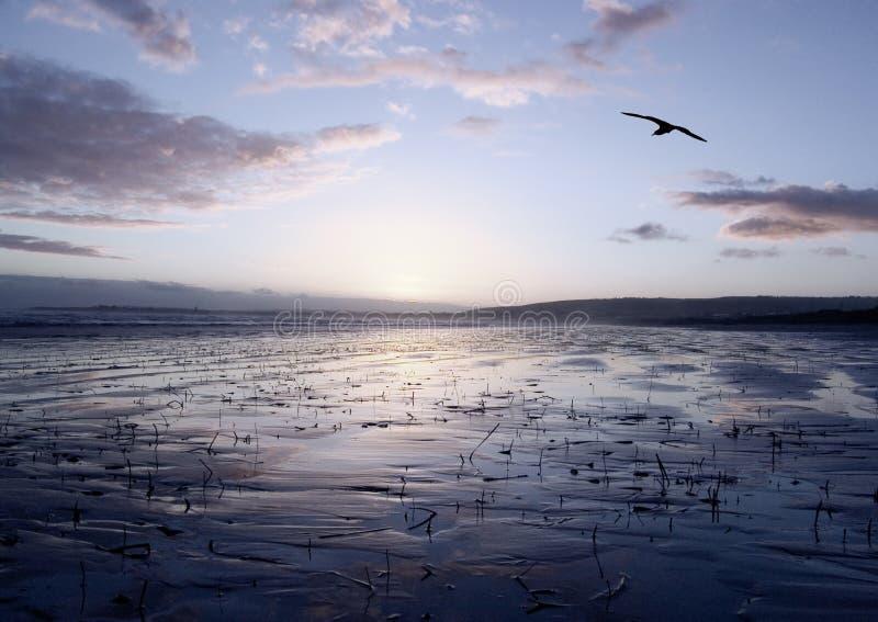 Download Fridsam glidljud arkivfoto. Bild av purpurt, vatten, liggande - 281578