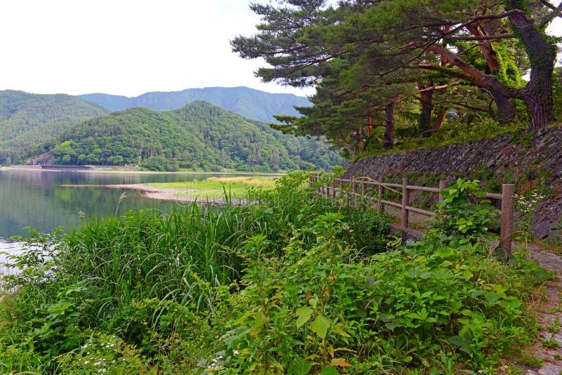 Fridsam naturplats med gröna berg, träd och sjön i Kawaguchiko nära Mount Fuji arkivbilder