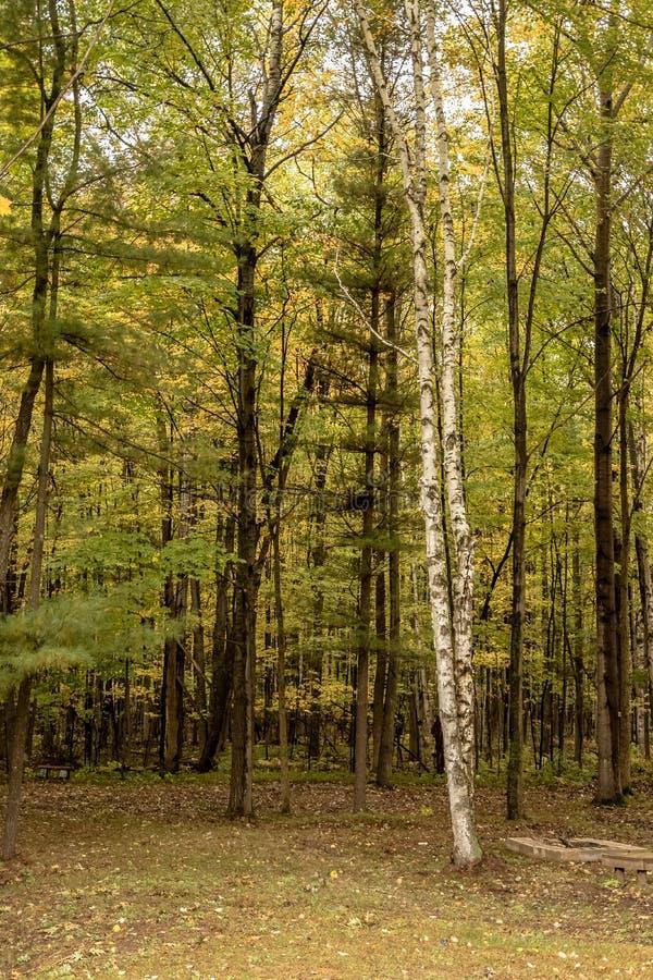 Fridsam northwoodsskogplats i Wisconsin under höst royaltyfria foton