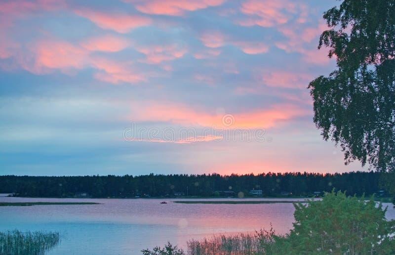 Fridsam rosa solnedgång vid en sjö med björkträdet royaltyfri fotografi