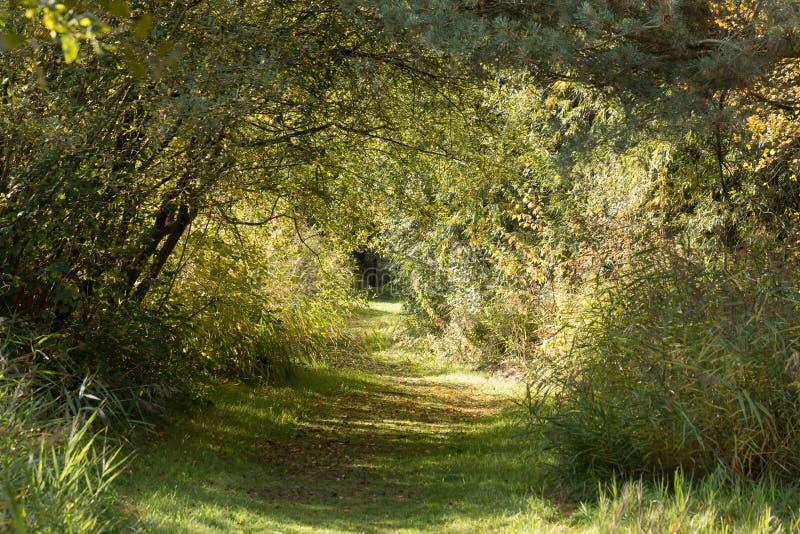 Fridsam skogbana inneslutad med träd, i ottahöstljus, England royaltyfri fotografi
