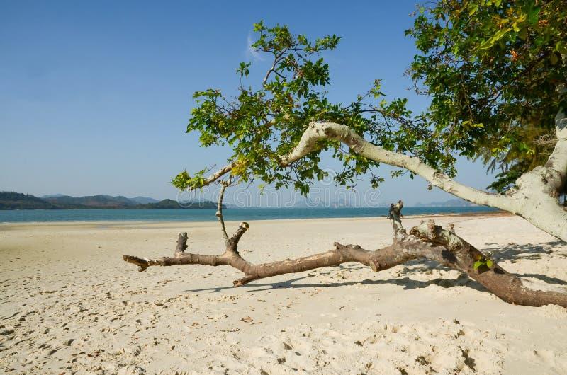 fridsam strand på Koh Lawa, Phang Nga landskap, Thailand arkivfoto