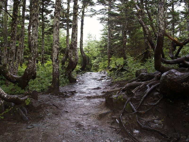 Fridsamma Forest Mountain Trail arkivfoton