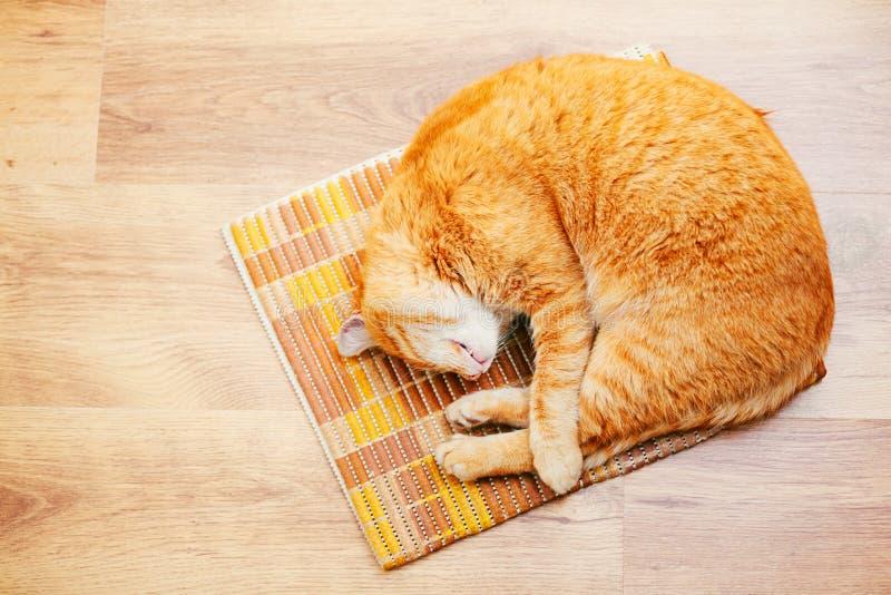 Fridsamma orange röda Tabby Cat Male Kitten Sleeping royaltyfri bild