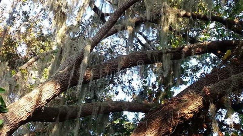 Fridsamma träd arkivbild