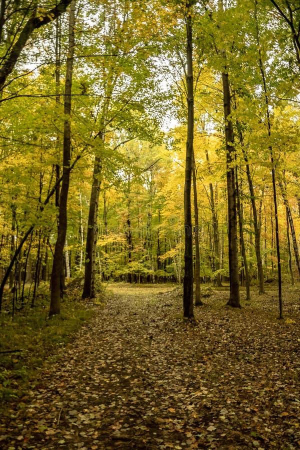 Fridsamt blad beströdd bana i skogen som lokaliseras i de norr träna royaltyfri foto