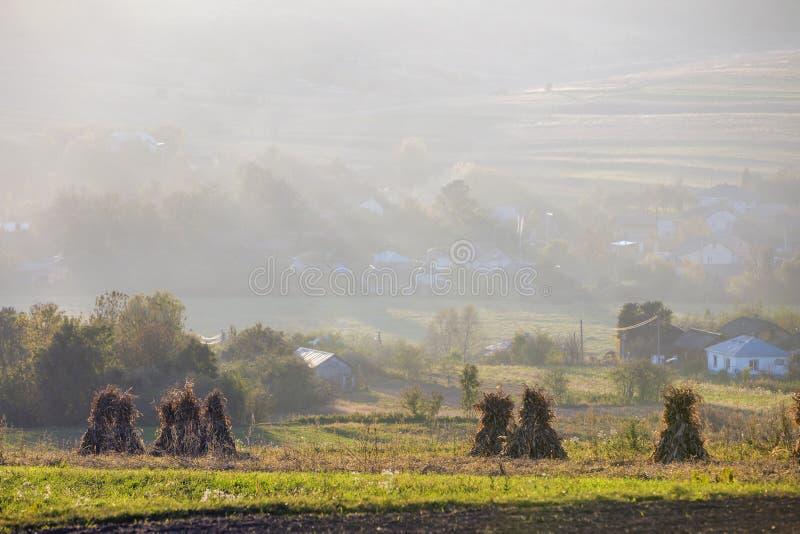 Fridsamt dimmigt landskap, lantlig höstpanorama Torr havre förföljer guld- kärvar i tomt gräs- fält efter skörden som är bondakti royaltyfria foton