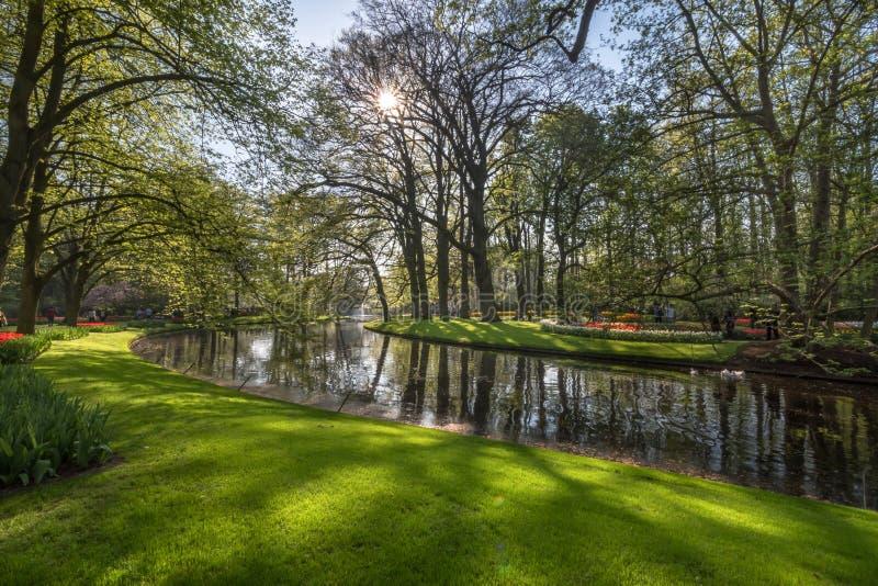 Fridsamt hörn med blommor och vatten på de Keukenhof trädgårdarna royaltyfri fotografi