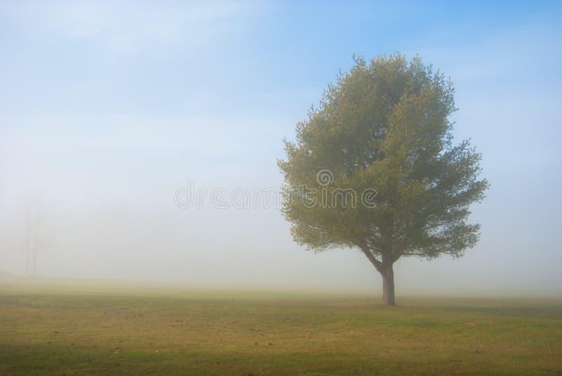 Fridsamt träd i lantligt fält arkivbild