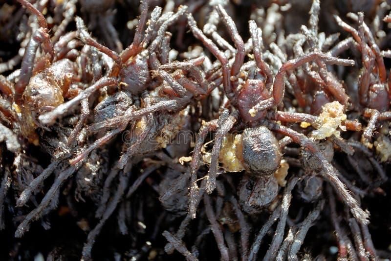 Fried arachnids stock photos
