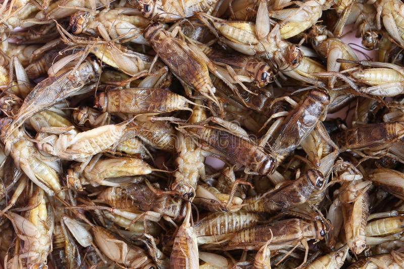 Fried crickets,This local popular Thai food of northeast people. Fried crickets,This local popular Thai food of northeast people for the design food background stock photography