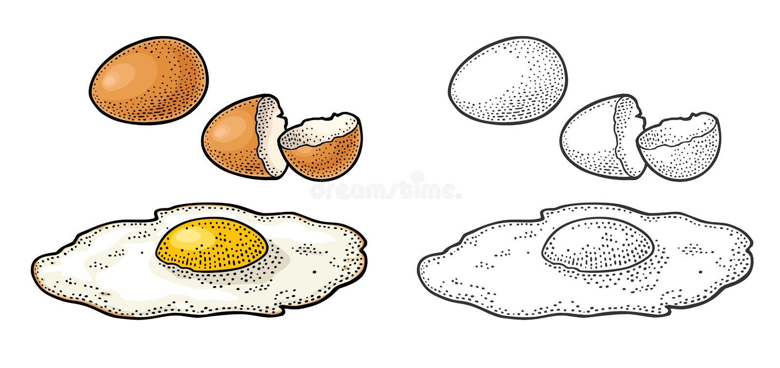 Fried egg and broken shell. Vintage color engraving illustration. Fried brown egg and broken shell. Vintage color and black engraving illustration for poster and vector illustration