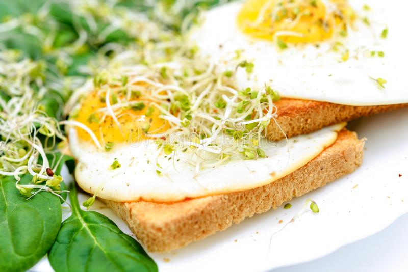 Fried eggs on toast and spinach. Tasty fried eggs on toast with spinach and young sprouts on a white plate in close-up royalty free stock images