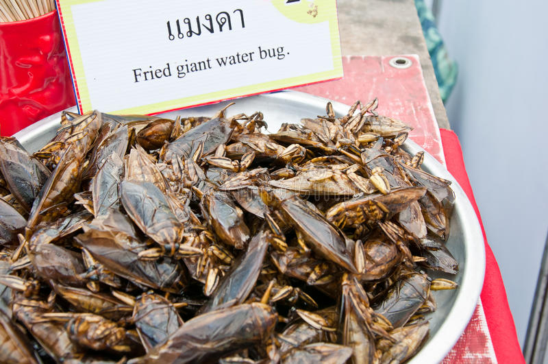 Fried giant water bug. With in aluminum salver stock photos