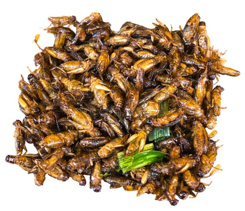 Fried grasshopper, fried insect, Thai food royalty free stock image