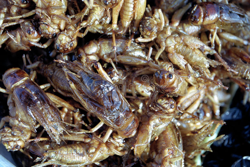 Fried grasshoppers stock photo