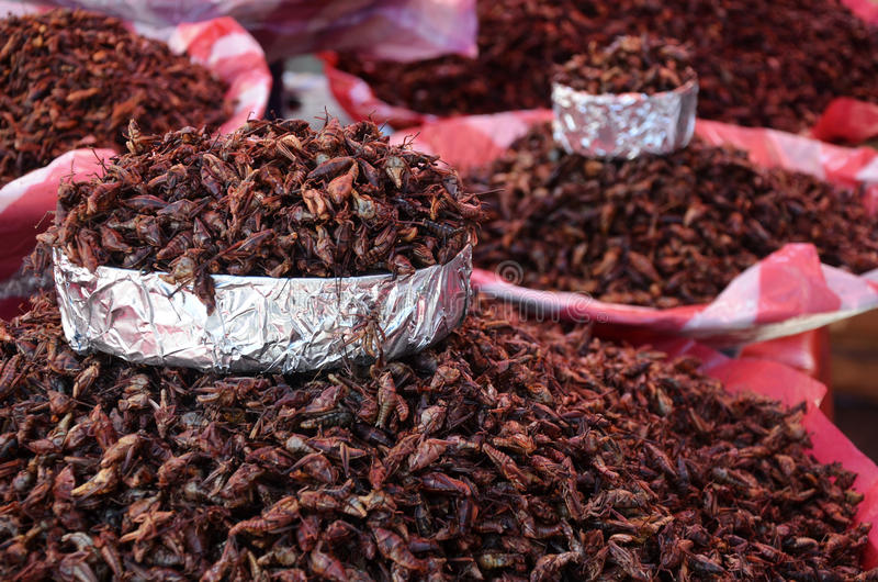 Fried grasshoppers at a market in Oaxaca stock photo