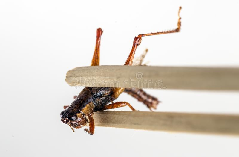 Fried Insect at street food. Closeup stock image