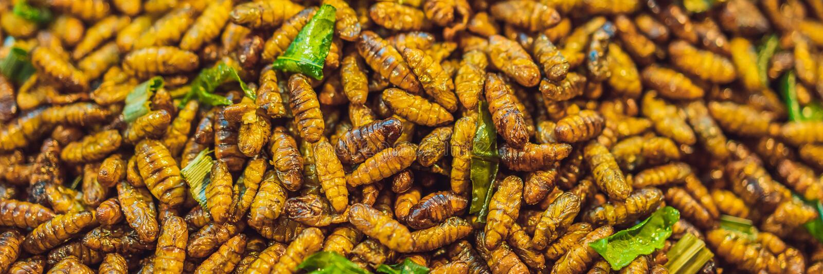 Fried insects, Bugs fried on Street food in thailand BANNER, LONG FORMAT. Fried insects, Bugs fried on Street food in thailand. BANNER, LONG FORMAT stock images