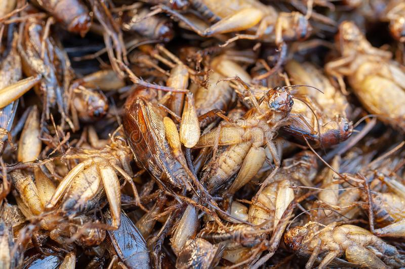 Fried insects, Bugs fried on Street food.selective focus. Fried insects, Bugs fried on Street food royalty free stock photo