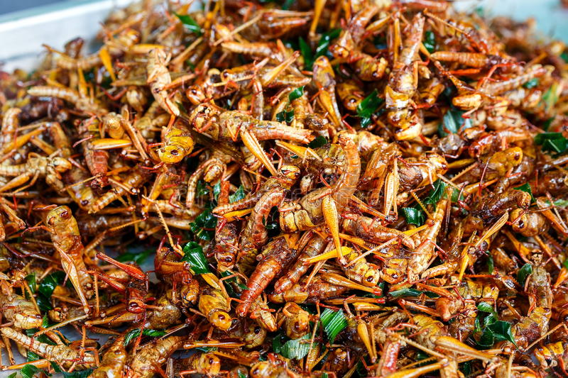 Fried insects,fried ,insects. stock photo