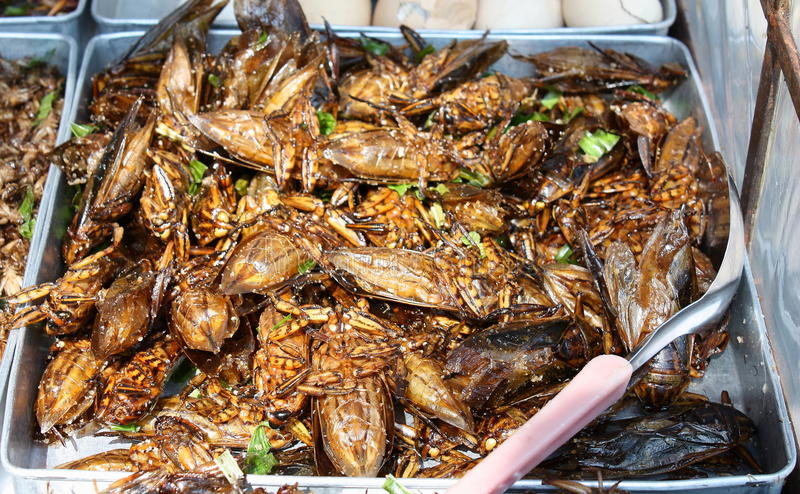 Fried Insects stock image