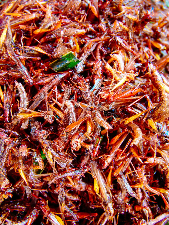 Fried insects on the street food stalls of Asia stock photography