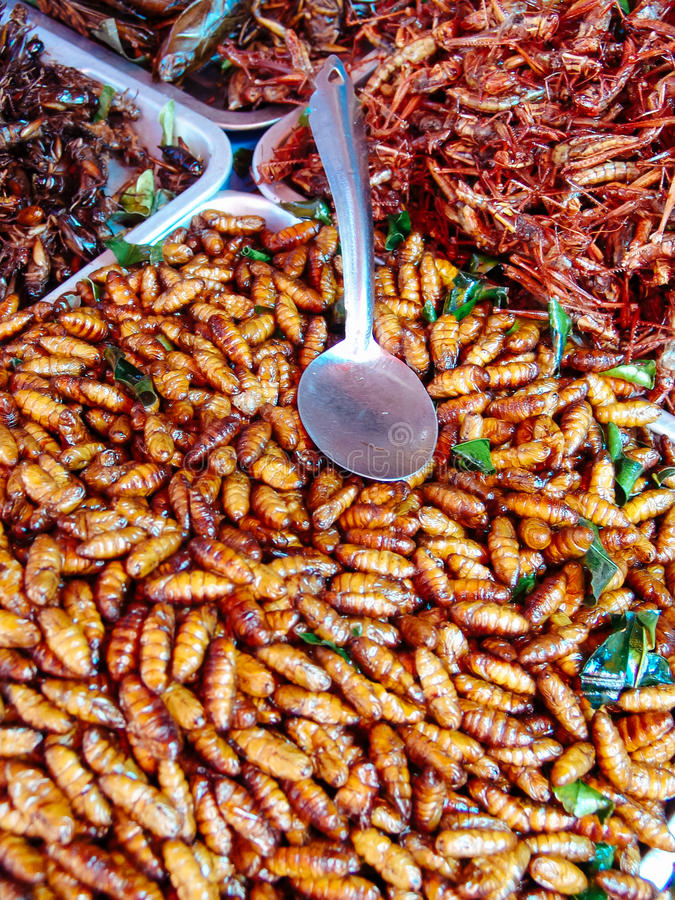 Fried insects on the street food stalls of Asia royalty free stock photo