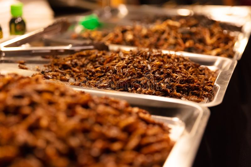 Fried Insects On Trays At Street Market stock photo