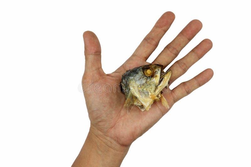 Fried Mackerel-hoofd in posthand op witte achtergrond wordt geïsoleerd die stock afbeeldingen