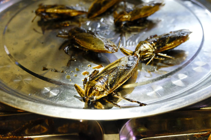 Fried Roaches photo stock