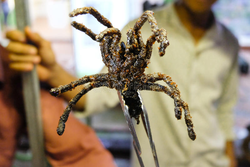 Fried Spiders stock photography