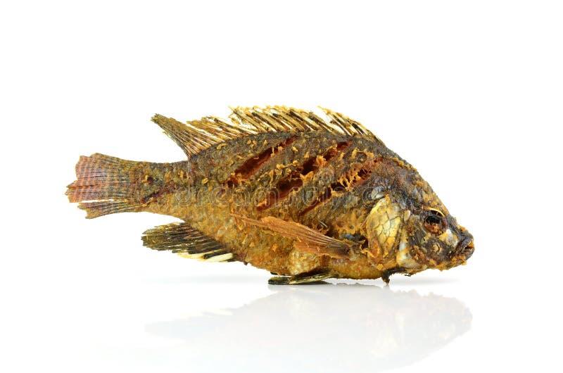 Fried Tilapia fisk som stekas på vit bakgrund arkivbilder