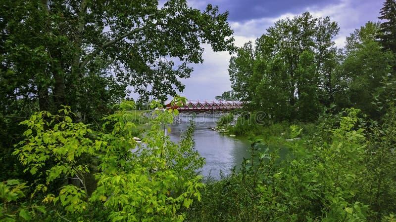 Friedensbrücke Calgary durch Bäume lizenzfreies stockbild