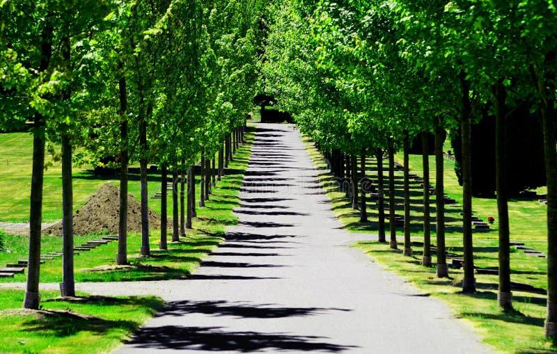 Friedhofs-Gehweg stockfotografie